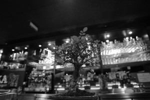 bonsai Nikka